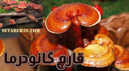 فروش بخور بحری همدان